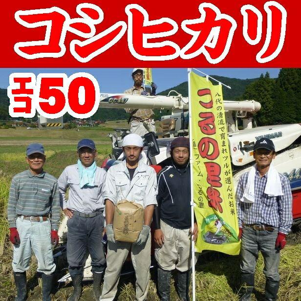 米・雑穀, 玄米 503kg