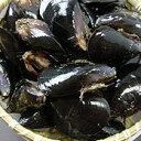 シーフード料理には欠かせない一品【広島直送】広島湾産「活きムール貝 1kg」
