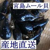【広島直送】広島湾産「天然 活きムール貝 2kg(宮島ムール)」