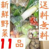 山口・九州産【送料無料】 『新鮮野菜の詰め合わせ11種類』(白ネギ・きゅうり・小松菜・大根・ピーマン他)