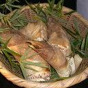 タケノコはこの時期だけ  山口県産朝掘りたけのこ(竹の子・筍)3kg