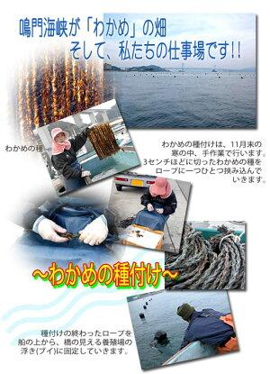漁師が育てた鳴門海峡産生わかめ