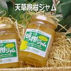 熊本天草特産のあまくさ晩柑を使用したほろにがジャム山下果樹園天草晩柑ジャム150g