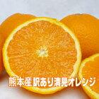 【送料無料】山下果樹園訳あり清見オレンジLサイズ30個入りみかん/訳あり/送料無料/5kg/オレンジ