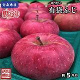 【常温便、送料無料】青森県産  有袋ふじ 訳あり 5Kg(約5キロ)  晩生種りんご 食品 果物 フルーツ お取り寄せグルメ