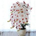 胡蝶蘭 造花 常滑産陶製鉢に入った気品あふれる胡蝶蘭の鉢植 ...