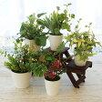 【CT触媒】姫グリーンアレンジ5個おまかせセット【観葉植物 造花 シルクフラワー】