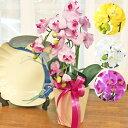 胡蝶蘭 造花 手頃な大きさの5本立ちお中元 お歳暮 年末年始...