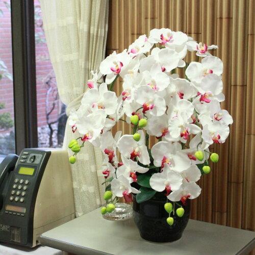 常滑産陶製鉢に入った気品あふれる胡蝶蘭の鉢植え5本立ち【品質保...
