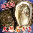 香住産の 岩牡蠣 は夏限定!日本海の天然の味覚、 岩牡蠣 をどうぞ♪11〜12cm×10個(2kg)[冷蔵][岩カキ10ヶ2kg]