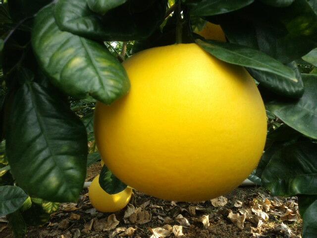 フルーツ・果物, みかん 10