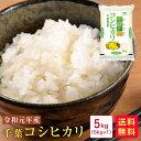米 5kg 送料無料 令和元年産 千葉コシヒカリ5kg【新米