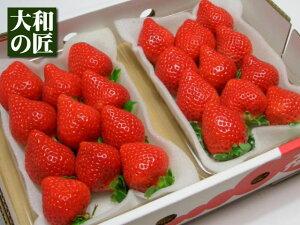赤くて…丸くて…大きくて…ウマい♪濃厚な味のイチゴが好きな方にピッタリのブランドイチゴ【1...