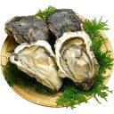 岩牡蠣の美味しさをまだ知らない人を世の中からなくしたい!・・と言う訳で超格安!天然岩牡蠣 ...