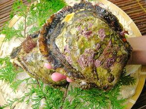 伊勢志摩天然岩牡蠣セット特大サイズ8個入