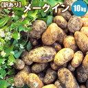 じゃがいも メークイン M/LM混 10kg 北海道 じゃがいも ジャガイモ 送料無料 メークインも 訳あり お取り寄せ 食べ物 食品 通販