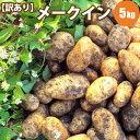 じゃがいも メークイン M/LM混 5kg 北海道 ジャガイモ 送料無料 訳あり お取り寄せ 食べ物 食品 通販