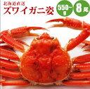 【かに カニ 蟹】 ズワイガニ姿570g×8尾【送料無料】 ...