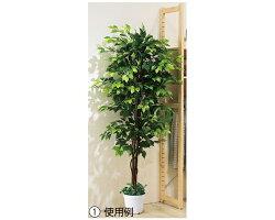 人工観葉植物「ベンジャミン立ち木グリーン(H210cm)1台」天然幹を使用した大型で存在感のある人工樹木を、お手頃価格でご提供。劣化防止コーディング&殺虫効果のある燻製処理をしているので安心です