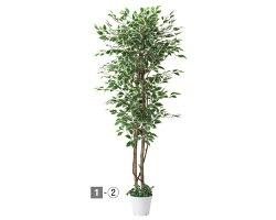 人工樹木ベンジャミン立ち木ホワイト/グリーン(H180cm)1台〈インテリア・装飾品〉