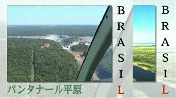エコシア酵素,ブラジル発酵食品90+30【4ヶ月分】