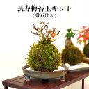 苔栽培キット