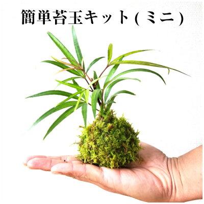 苔玉 キット 苔 敬老の日 【 簡単 苔玉キット (ミニ) 】