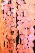 アジアン雑貨バリ♪デコレーションピンクシェル(5本セット)♪【送料無料】おしゃれインテリアエスニック貝殻のれんキラキラ