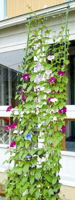 組み立てカンタン!つる性植物に最適!DAIM 緑のカーテン 伸縮立掛け80cm幅 高さ160~300cm...