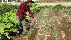 【レビューを書いて送料無料!】土起こしがとってもラク!家庭菜園向け深耕農具「アルキメデス」35250