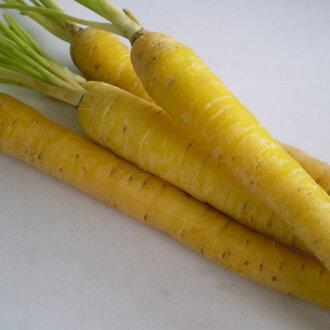 供胡蘿卜無農藥5kg有機JAS瑕疵胡蘿卜無農藥果汁使用的胡蘿卜胡蘿卜無農藥5K無農藥胡蘿卜胡蘿卜有機肥耕作超過20年的實際成果5k●β-胡蘿卜素預防癌以及是有作為抑制的效果強力的抗氧化能力的營養物。