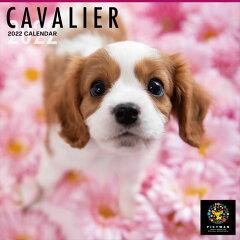 2021/09/18発売予定! キャバリア PICTWANカレンダー DOG 2022年カレンダー 22CL-50006[ヨコレコ 楽天市場店]