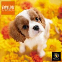 2021/09/18発売予定! ミニ キャバリア PICTWANカレンダー DOG 2022年カレンダー 22CL-50032[ヨコレコ 楽天市場店]