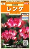 【レンゲ】紫雲英【サカタのタネ】(5ml)【耐寒性一年草】[秋まき]れんげの種907870