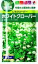 【緑肥・景観に】ホワイトクローバー【タキイ種苗】(60ml)しろクローバー[春まき][秋まき]