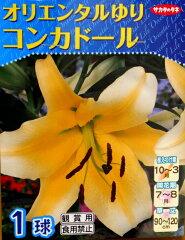 大きな花と甘い香りが魅力的なオリエンタルゆりです【秋植え球根】~オリエンタルゆり~コンカ...