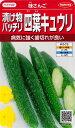 【味さんご】漬物バッチリ四葉キュウリ 【サカタのタネ】(18粒)野菜種[春まき] 920406