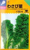 【からしな】わさび菜 【中原採種場】(6ml)野菜種[春まき][秋まき]