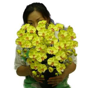 造花光触媒胡蝶蘭ミディSサイズライトイエロー5本立ちテーブルサイズ