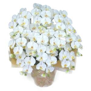 造花光触媒胡蝶蘭大輪白M10本立ち人工造花