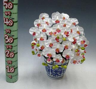 造花光触媒胡蝶蘭ミディSサイズ白赤(セミアルバ)5本立ちテーブルサイズ