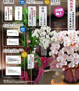 ギフトに選べるミディ胡蝶蘭1本立ちミニ観葉寄せ【送料無料】【あす楽対応】