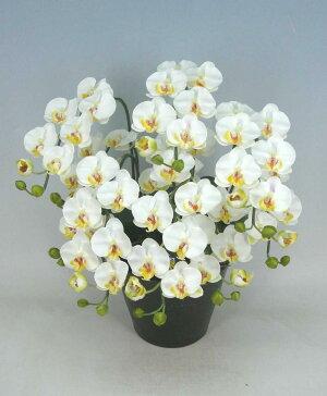 造花光触媒胡蝶蘭ミディSサイズ白5本立ちテーブルサイズ