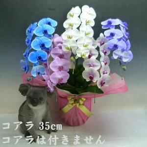 胡蝶蘭大輪カラフルエレガンス5色5本立ち45輪