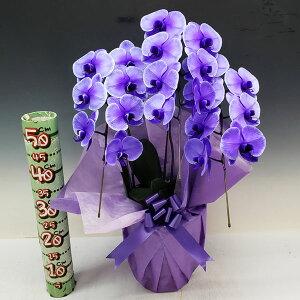 【満開】胡蝶蘭大輪パープルエレガンス紫3本立ち21輪