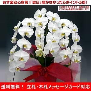 胡蝶蘭大輪白3本立ち27輪以上選べる3色花ギフト