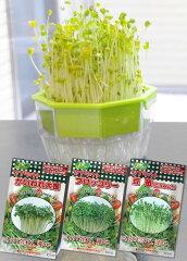 キッチンで簡単に楽しめるタネ付の栽培セットです!キッチン菜園#120 3個組栽培セット【RCP】...