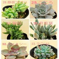 33種類から選べる6個セット多肉植物寄せ植えに最適セットがお得
