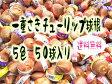 【予約商品】【送料無料】複数購入で特典あり!! お得な一重咲チューリップ球根 5色 50球(赤、白、黄、紫、桃)