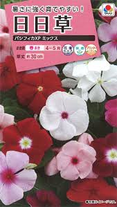 暑さに強く育てやすい!花種 小袋 日日草ニチニチソウ パシフィッカXpミックス 【花の種】...